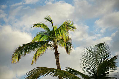Photograph - Bahamas Palm Trees by Anthony Doudt