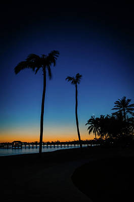 Photograph - Bahamas Palm Trees In The Early Morning by Anthony Doudt