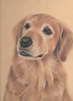 Golden Retriever Drawing - Bailey by Debbie Stonebraker