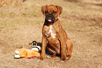 Bailey The Boxer Puppy Print by Angie Tirado