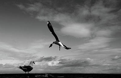 Photograph - Bait Thief In Black And White by Nareeta Martin