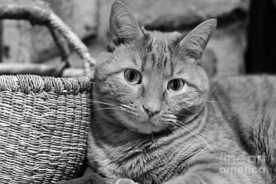 Photograph - Baket Cat by Patrick M Lynch