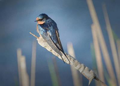 Swallow Photograph - Balance 3 by Fraida Gutovich