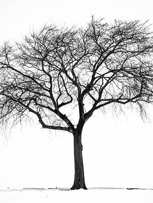 Photograph - Balance by Stewart Helberg