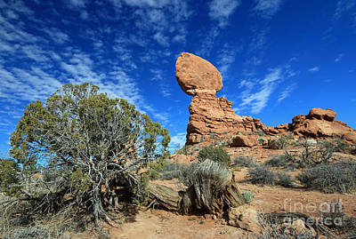 Photograph - Balanced Rock And Pinyon by Mary Haber