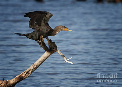Photograph - Balancing Act by David Cutts