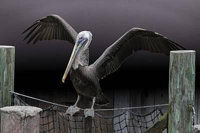 Photograph - Balancing Act - Pelican by Debi Dalio