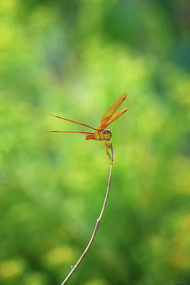 Photograph - Balancing Act by Rick Furmanek