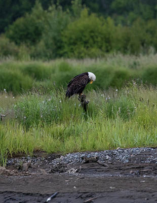 Photograph - Balancing Eagle by Gloria Anderson