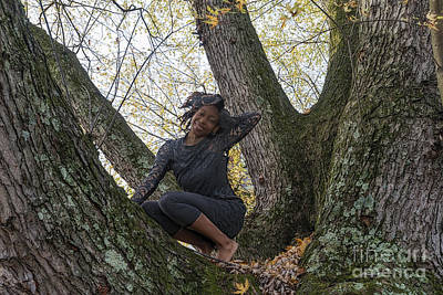 Photograph - Balancing In A Tree by Dan Friend