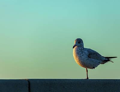 Photograph - Balancing by Jonathan Nguyen