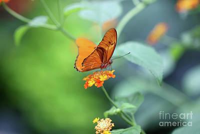 Photograph - Balancing Julia Butterfly by Karen Adams