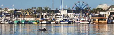 Photograph - Balboa Dolphin by Sean Davey