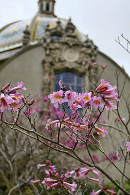 Photograph - Balboa Park Building And Spring Flowers - San Diego by Waterdancer