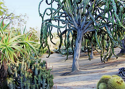 Photograph - Balboa Plants by Munir Alawi