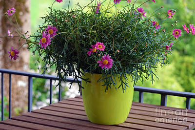 Photograph - Balcony Flowers by Susanne Van Hulst