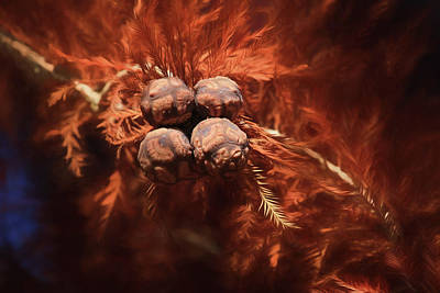 Photograph - Bald Cypress Cones by Donna Kennedy