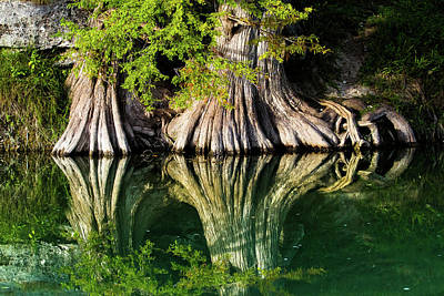 Root Photograph - Bald Cypress Rooting In by Ellie Teramoto