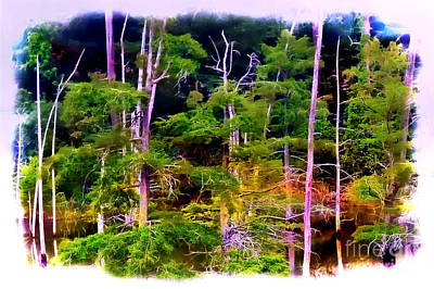 Photograph - Baldcypress Swamp by Judi Bagwell