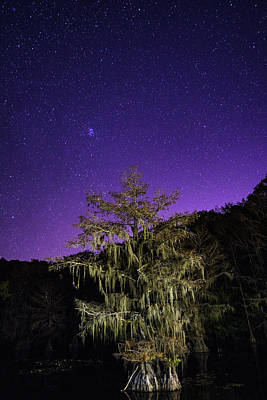 Swamp Photograph - Bald Cypress Under A Starry Sky - The Pleiades Star Cluster by Ellie Teramoto