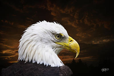 Watercolor Typographic Countries - Bald Eagle - Freedom and Hope - Artist Cris Hayes by Cris Hayes