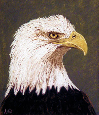 Pastel - Bald Eagle 1 by Jan Amiss