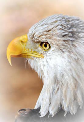 Bald Eagle 15 Art Print by Marty Koch