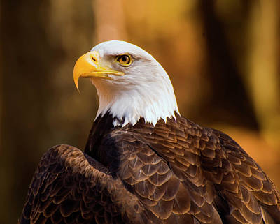 Digital Art - Bald Eagle 2 by Chris Flees