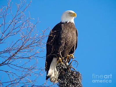 Wildlife Photograph - Bald Eagle 2 by Dora Miller