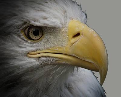 Photograph - Bald Eagle 3 by Ernie Echols
