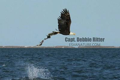Photograph - Bald Eagle 5747 by Captain Debbie Ritter
