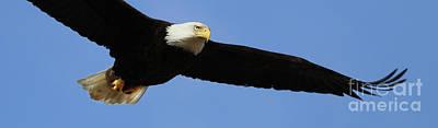 Animals Photos - Bald Eagle 6614 by Jack Schultz