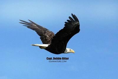 Photograph - Bald Eagle 7304 by Captain Debbie Ritter