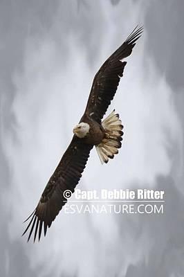 Photograph - Bald Eagle 7437 by Captain Debbie Ritter
