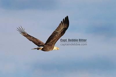 Photograph - Bald Eagle 9691 by Captain Debbie Ritter