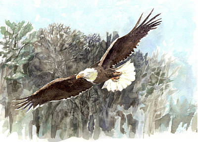 Painting - Bald Eagle by Abby McBride