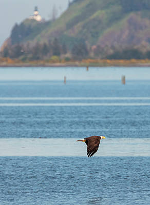 Photograph - Bald Eagle And Cape Disappoinment by Loree Johnson