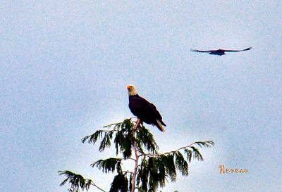 Photograph - Bald Eagle And Mate by Sadie Reneau