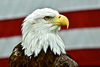 Photograph - Bald Eagle And Old Glory by Don Mercer