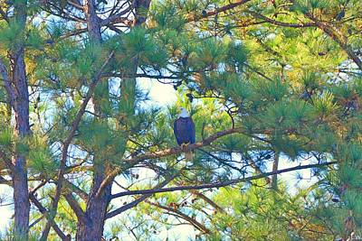Photograph - Bald Eagle And Pines by Lisa Wooten