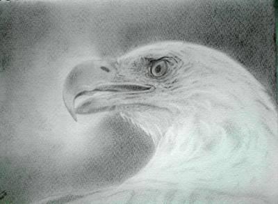 Bald Eagle Pencil Drawing Drawing - Bald Eagle by Anuradhika Senevirathne