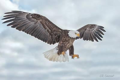 Photograph - Bald Eagle Blue Sky by CR Courson