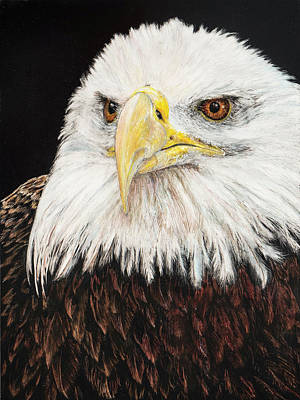 Disappointed Painting - Bald Eagle by Carol Hanna
