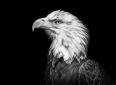 Photograph - Bald Eagle by Chandler Walker