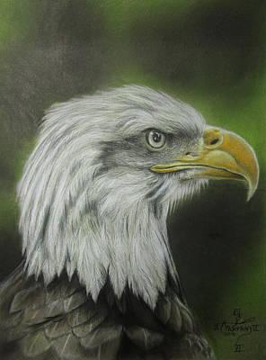 Bald Eagle Pencil Drawing Drawing - Bald Eagle Close Up by Jonathan Anderson
