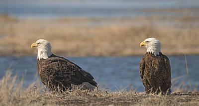 Photograph - Bald Eagle Couple by Loree Johnson