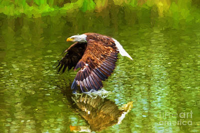 Photograph - Bald Eagle Cutting The Water by Les Palenik