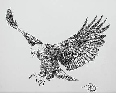 Drawing - Bald Eagle by Cyril Maza