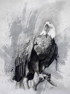 Birds Of Prey Drawing - Bald Eagle Drawing by Steve Goad