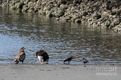 Neah Bay Photograph - Bald Eagle Eating A Fish At Neah Bay In Washington by Brandon Alms